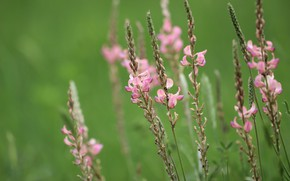 Picture background, color, Prairie flowers