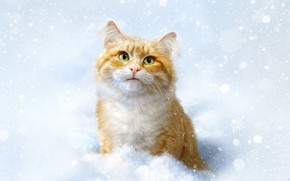 Picture Winter, Cat, Snow, Cat, Style, Face, Art, Art, Winter, Style, Snow, Cat, Illustration, Animal, Redhead, …