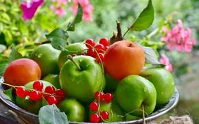Wallpaper apples, plate, fruit, currants, apricots