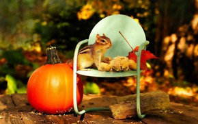 Picture autumn, light, Board, garden, harvest, chair, pumpkin, Chipmunk, nuts, chair