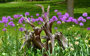 Picture greens, grass, flowers, Park, tree, snag, flowerbed, Allium, decorative bow