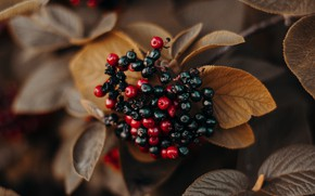 Picture NATURE, BERRIES, LEAVES