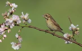 Picture bird, branch, flowers