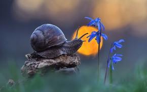 Picture macro, flowers, nature, snail, bokeh