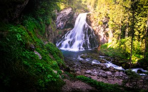 Picture forest, waterfall, river