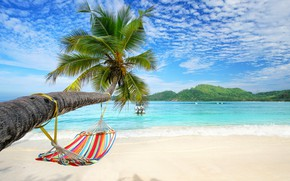 Picture sand, sea, beach, summer, palm trees, hammock, summer, beach, sea, sand, paradise, palms, hammock, tropical