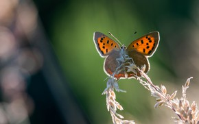 Picture macro, background, butterfly, orange, insect, bokeh, stem