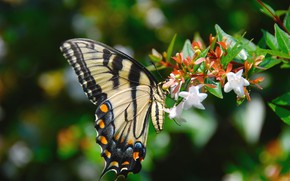 Picture flowers, background, butterfly