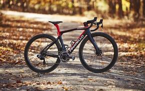 Picture autumn, bike, sport, bike, bicycle, Carbon, Sport, road, Love on the Bike, Pinarello, procycling, Pinarello …