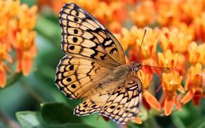 Picture flowers, butterfly, orange, bokeh