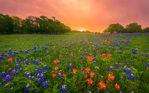 Picture flowers, morning, meadow