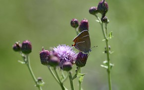 Picture background, butterfly, summer mood