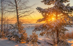 Picture winter, snow, trees, dawn, morning, pine, Ed Gordeev, Gordeev Edward, Saint Petersburg