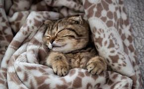 Picture legs, muzzle, plaid, kitty, sleep, Edgars Gerskovics