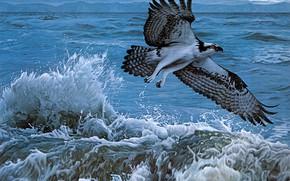 Picture sea, wave, water, flight, squirt, storm, bird, figure, graphics, picture, art, painting, hawk, predatory, osprey, …