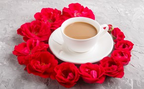 Picture roses, Cup, red, buds