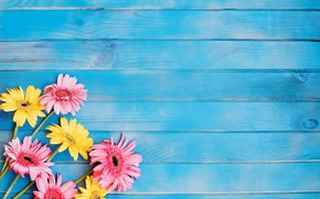 Picture Board, petals, gerbera
