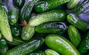 Picture water, Shine, fresh, cucumbers, pickles, marinated, swim, salted, brine, blank, salt