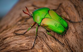 Picture green, tree, beetle, insect, bark, blurred background, brilliant