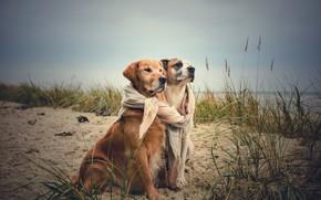 Picture sea, autumn, coast, friends, two dogs