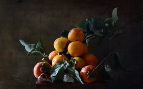 Picture leaves, light, branches, the dark background, food, texture, plate, shell, fruit, still life, stand, composition, …