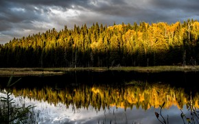 Picture forest, summer, light, nature, lake, morning