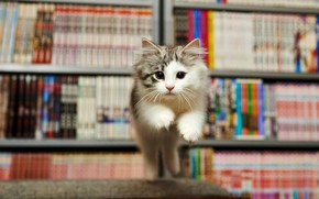 Picture kitty, emotions, fright, jump, books, library, face, the expression, jumping, white with grey