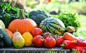 Picture greens, grass, the sun, Board, watermelon, garden, pumpkin, pear, pepper, fruit, vegetables, tomatoes, carrots, cabbage, …