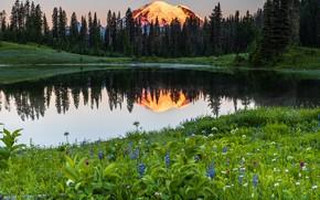 Picture trees, landscape, sunset, mountains, nature, lake, reflection, stones, USA, reserve, National Park, Mount Rainier, Mount …