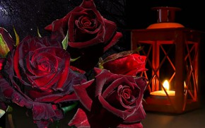 Picture rose, bouquet, lantern, still life, baccarat