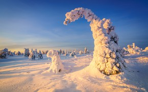 Picture winter, frost, forest, the sky, light, snow, trees, nature, blue, ate, winter, Christmas trees, snowy