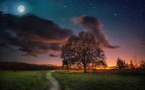Wallpaper the sky, sunset, night, tree, the moon, meadow, track, path, starry sky