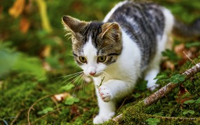 Picture greens, cat, look, face, nature, pose, kitty, moss, branch, walk, bokeh, spotted