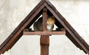 Picture roof, cat, cat, house