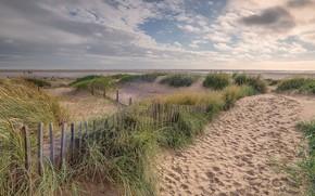 Picture sea, beach, summer, shore