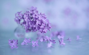 Picture macro, background, lilac