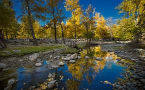 Picture autumn, the sky, trees, stream, stones