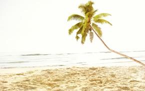 Picture palm trees, paradise, beach, shore, palms, sand, sea, summer, tropical, the sun, summer, beach, sea, …