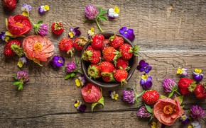 Picture flowers, strawberry, clover, violet