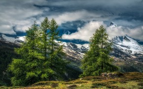 Picture forest, the sky, grass, the sun, clouds, trees, mountains, stones, rocks, HDR, Switzerland, Alps, Zermatt, …