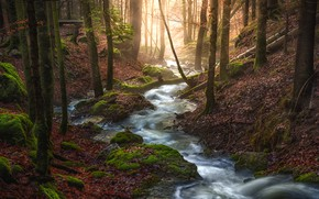 Picture light, trees, branches, moss, leaves, pond, autumn, forest, stream, stream, forest, for, stones