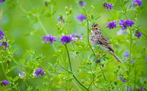 Picture flowers, purple, motley, bird, summer, green background