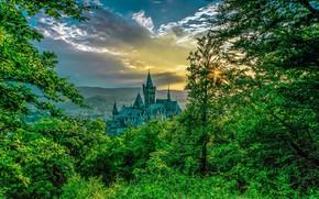 Picture trees, castle, Germany, Wernigerode, Wernigerode Castle