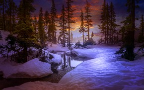 Picture winter, forest, trees, sunset, river