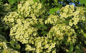 Picture tree, flowering, spring 2018, Meduzanol ©