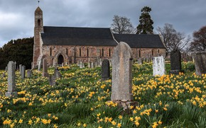 Picture flowers, stones, spring, Church, cemetery, tombstones, old, architecture, stone slabs, daffodils