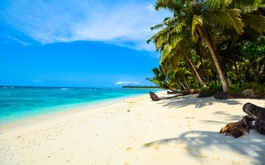Picture sea, summer, water, landscape, nature, tropics, palm trees