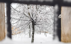 Picture winter, tree, window, the reshotka river canal,