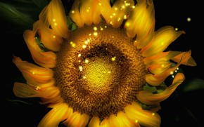 Picture flower, sunflower, computer design