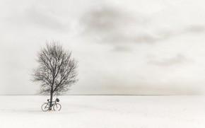 Picture field, bike, tree